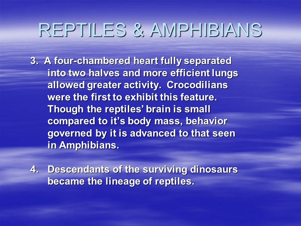 REPTILES & AMPHIBIANS 3. A four-chambered heart fully separated