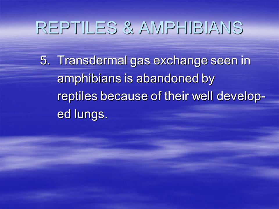REPTILES & AMPHIBIANS 5. Transdermal gas exchange seen in