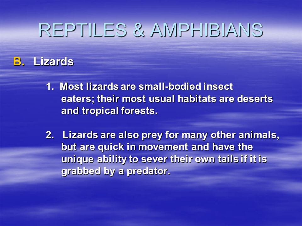 REPTILES & AMPHIBIANS Lizards 1. Most lizards are small-bodied insect