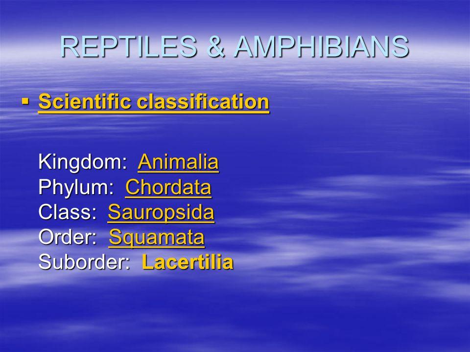 REPTILES & AMPHIBIANS Scientific classification