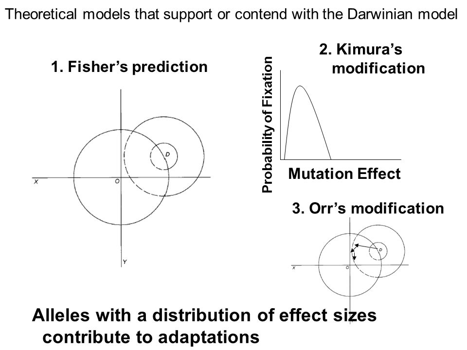 Alleles with a distribution of effect sizes contribute to adaptations