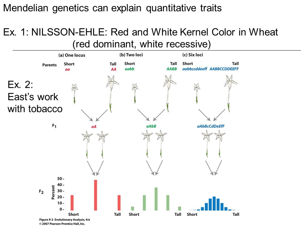 Mendelian genetics can explain quantitative traits