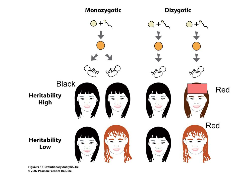 Black Red Red Figure 9.16 Estimating heritability from twin studies