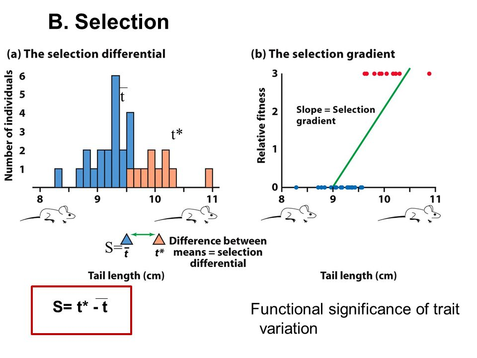 B. Selection t t* S= S= t* - t Functional significance of trait