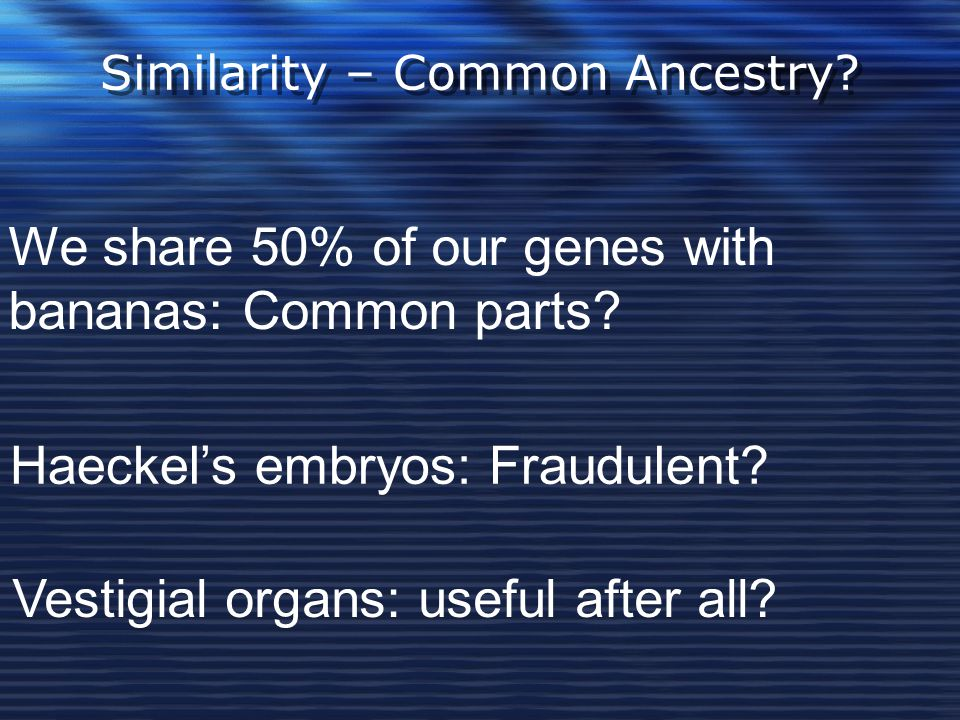 Similarity – Common Ancestry