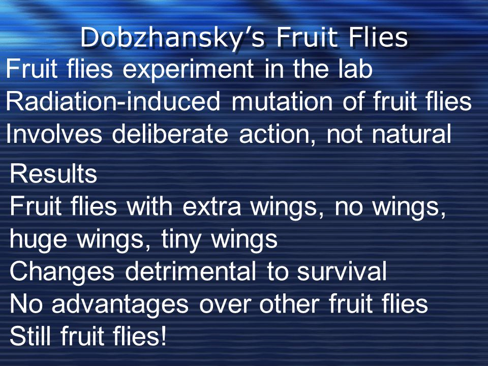 Dobzhansky's Fruit Flies
