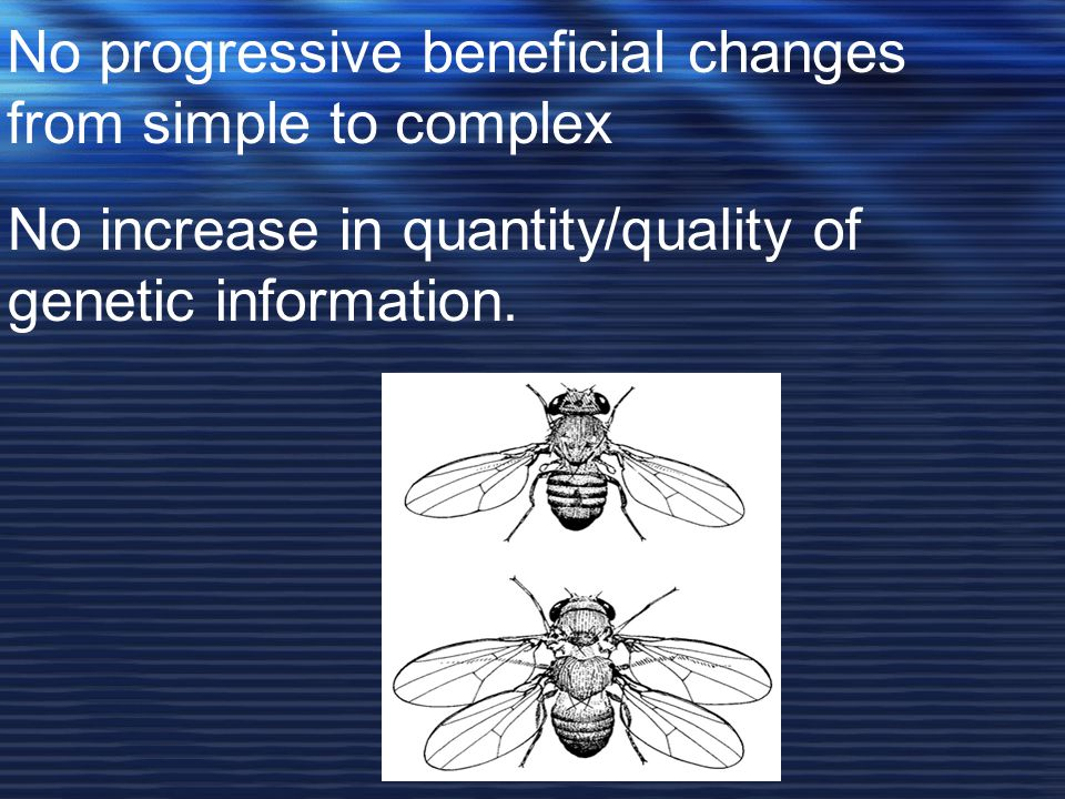 No progressive beneficial changes from simple to complex