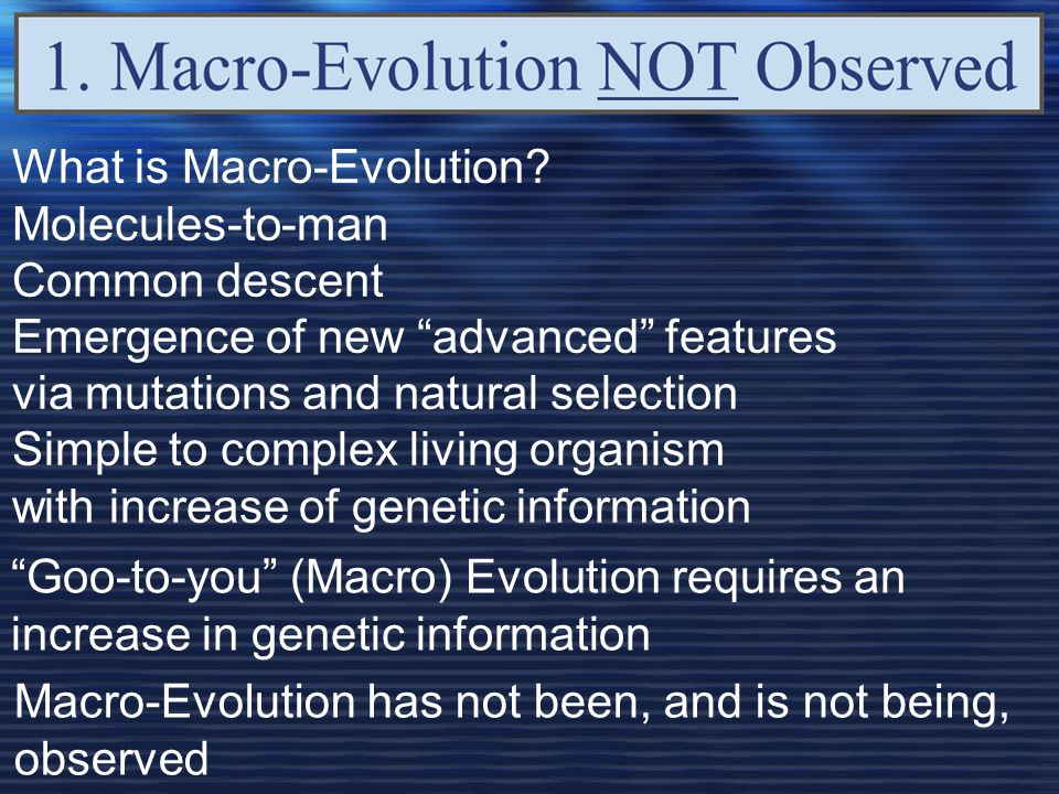 What is Macro-Evolution