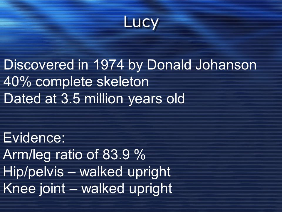 Lucy Discovered in 1974 by Donald Johanson 40% complete skeleton