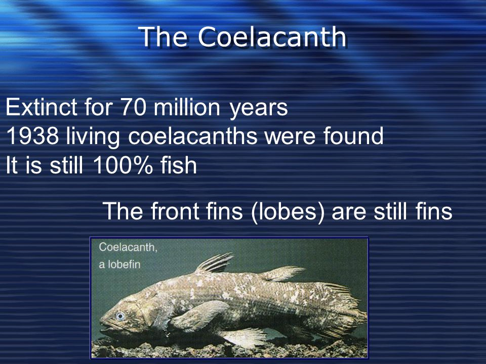 The Coelacanth Extinct for 70 million years