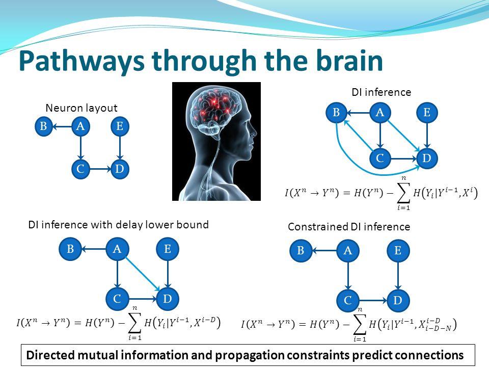 Pathways through the brain