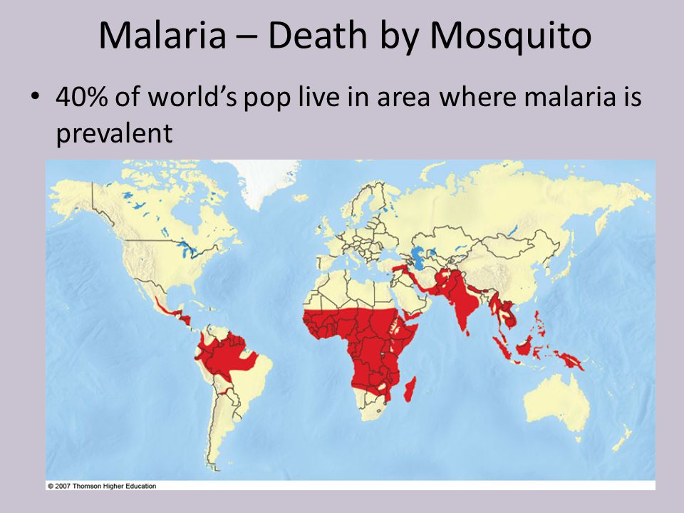 Malaria – Death by Mosquito