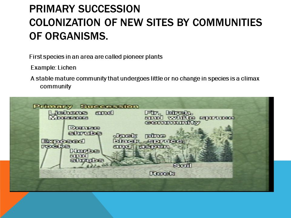Primary Succession Colonization of new sites by communities of organisms.