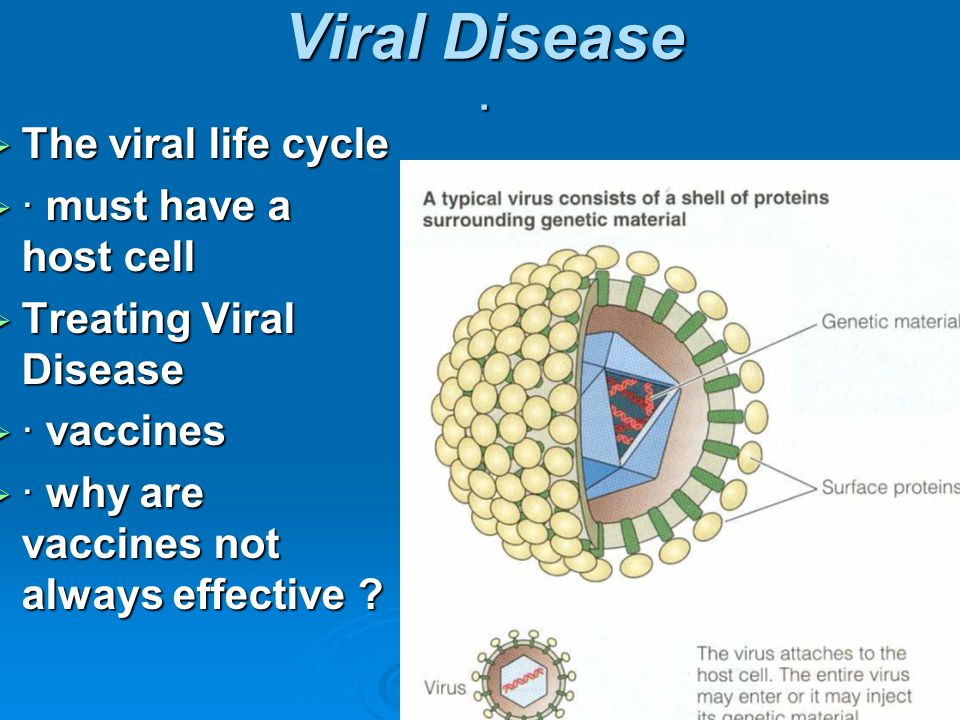 Viral Disease · The viral life cycle · must have a host cell