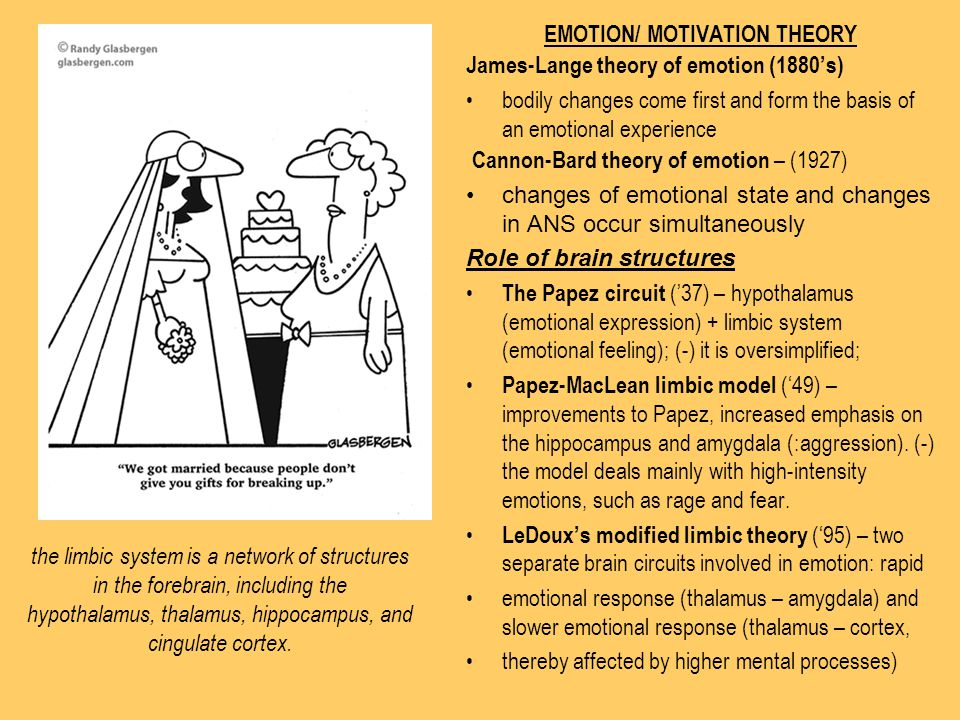 EMOTION/ MOTIVATION THEORY