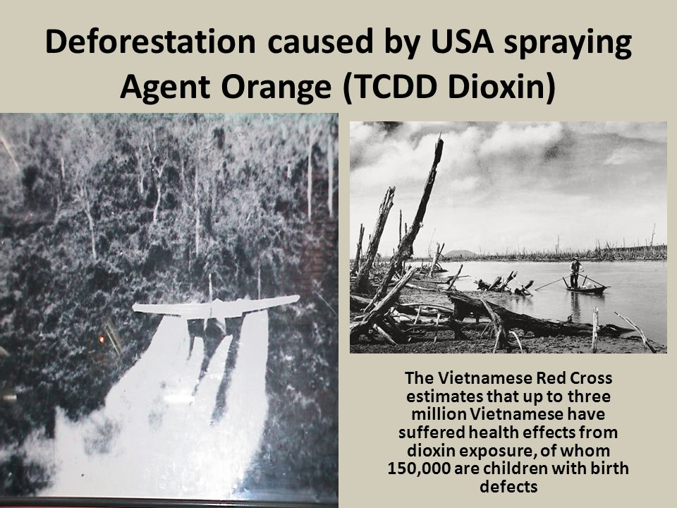 Deforestation caused by USA spraying Agent Orange (TCDD Dioxin)