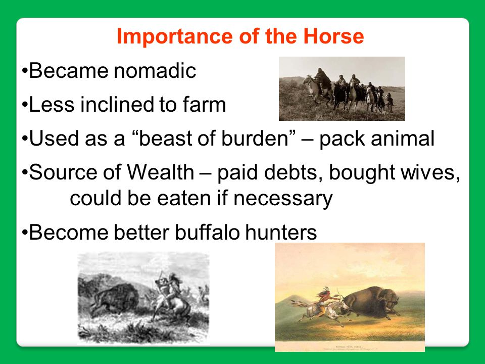 Importance of the Horse