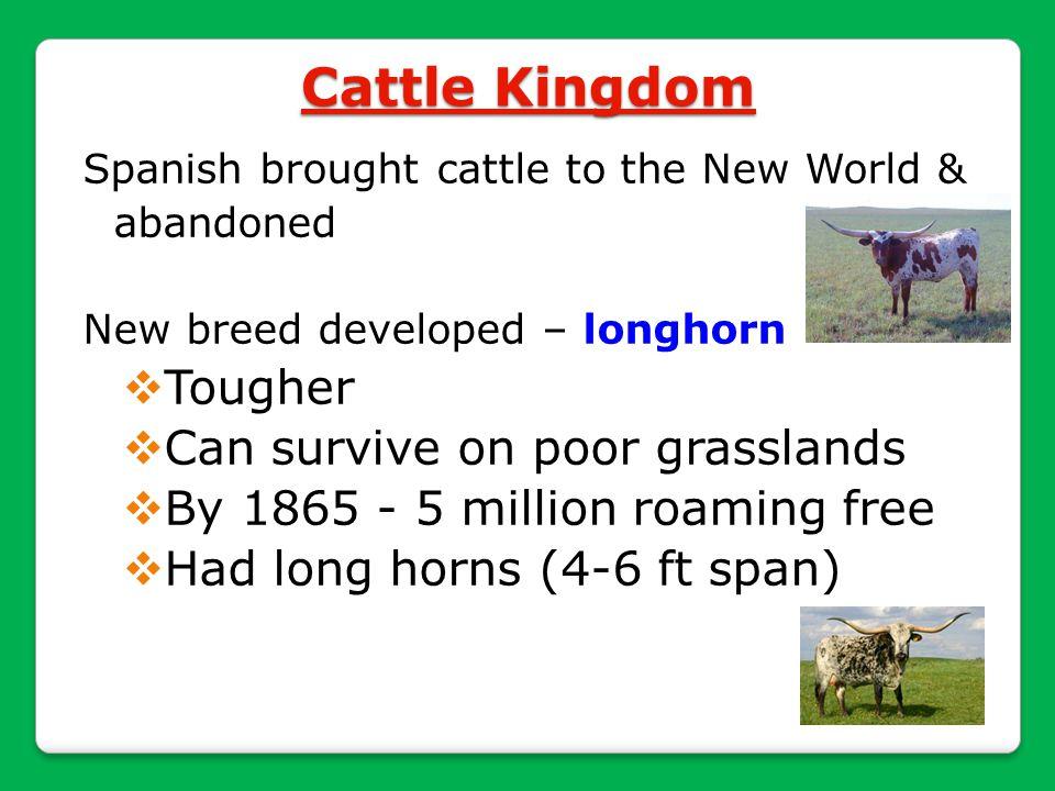 Cattle Kingdom Tougher Can survive on poor grasslands