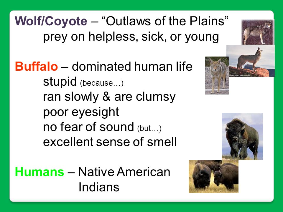 Wolf/Coyote – Outlaws of the Plains