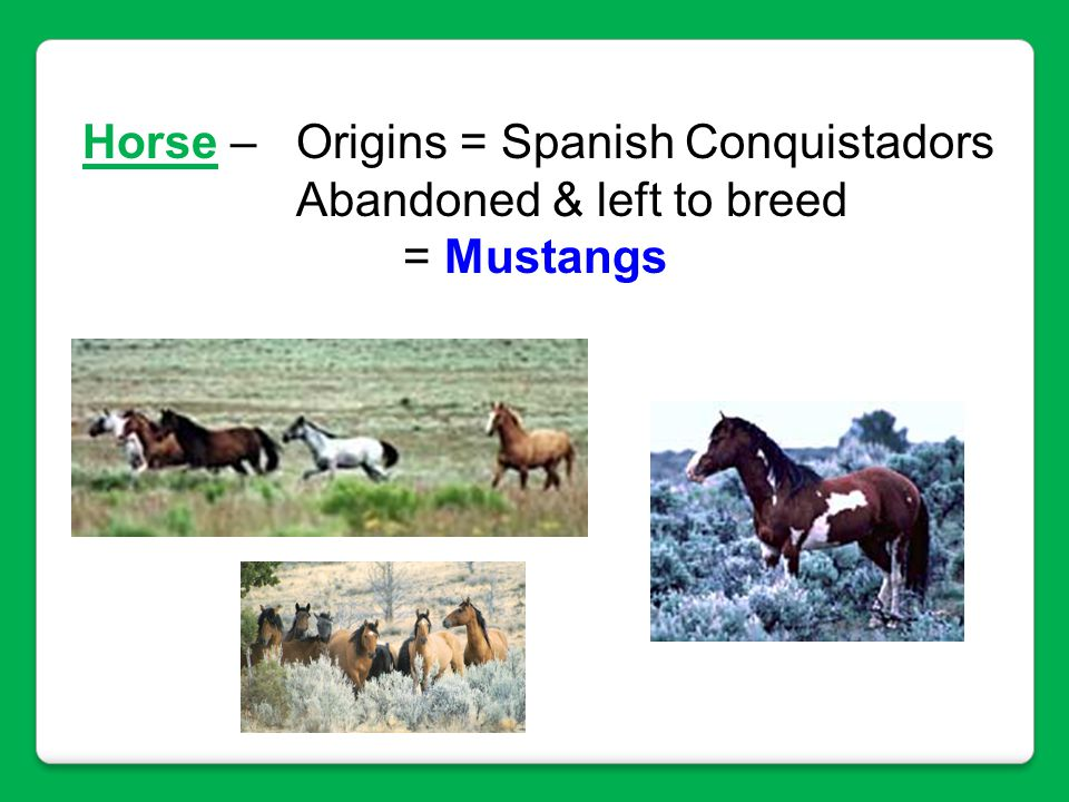Horse – Origins = Spanish Conquistadors
