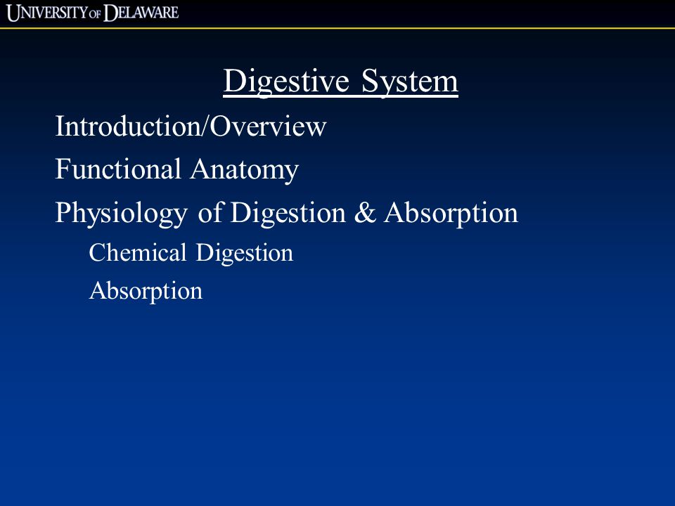 Digestive System Introduction/Overview Functional Anatomy