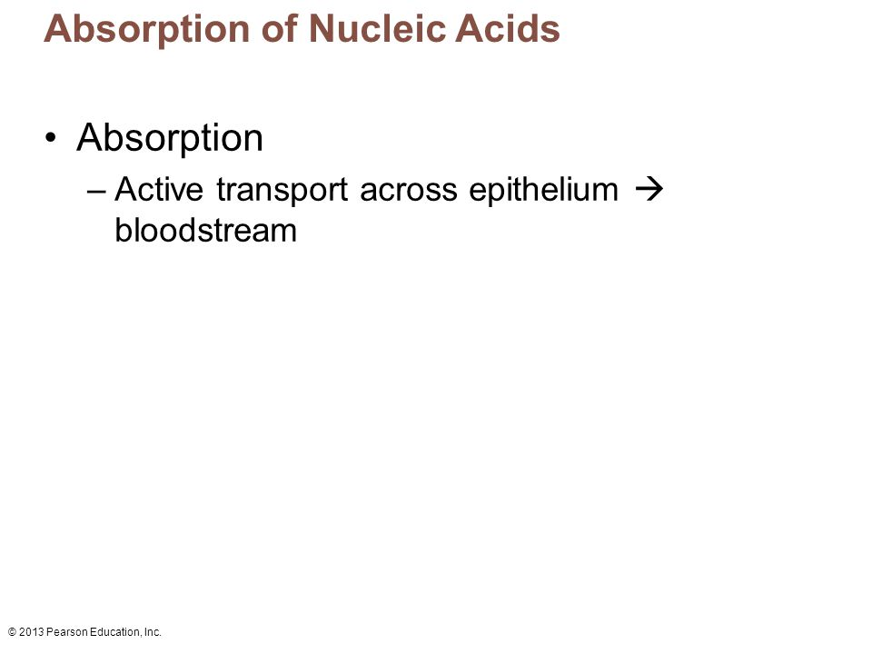 Absorption of Nucleic Acids