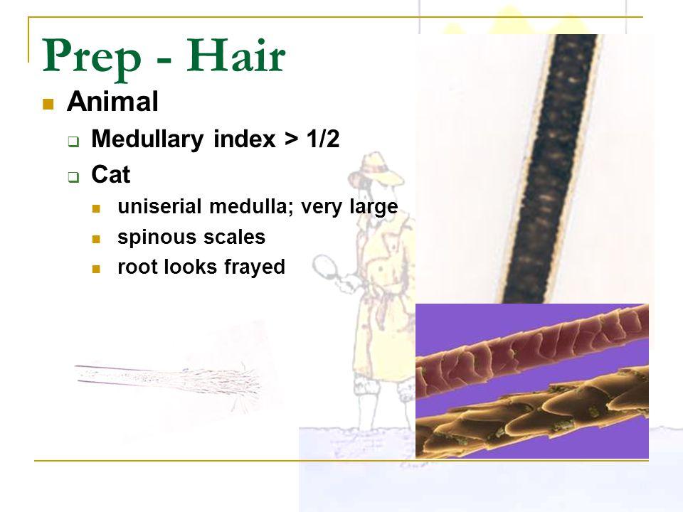 Prep - Hair Animal Medullary index > 1/2 Cat