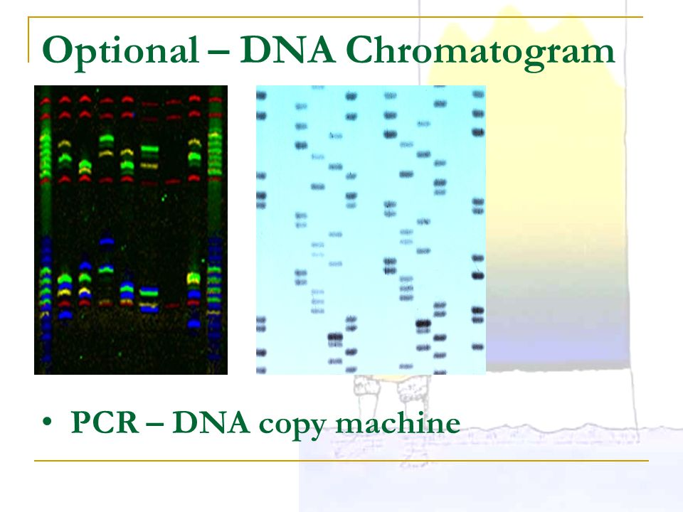 Optional – DNA Chromatogram