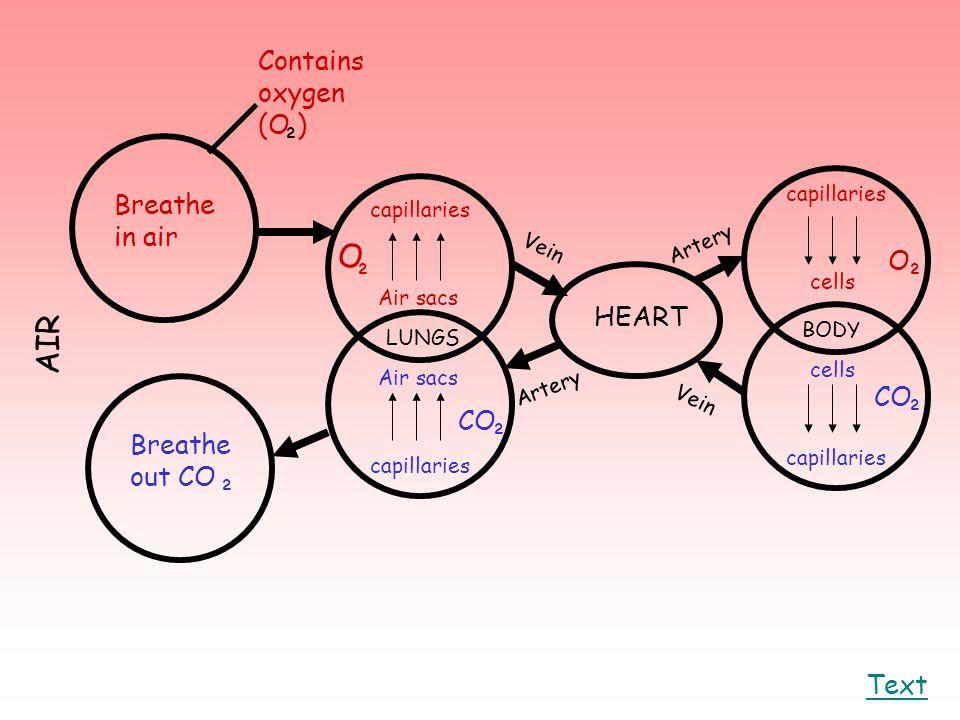O AIR Contains oxygen (O ) ² Breathe in air O ² ² HEART CO ² CO ²