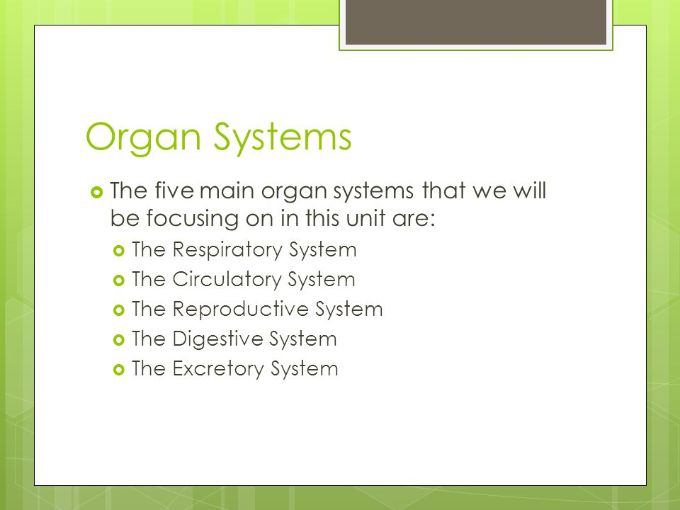 Organ Systems The five main organ systems that we will be focusing on in this unit are: The Respiratory System.