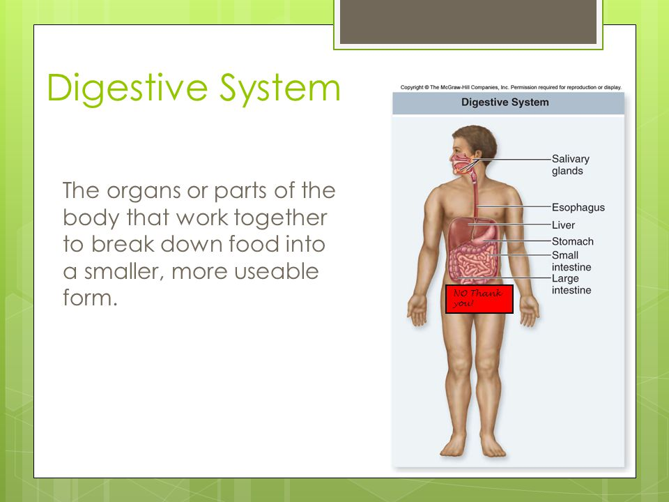 Digestive System The organs or parts of the body that work together to break down food into a smaller, more useable form.