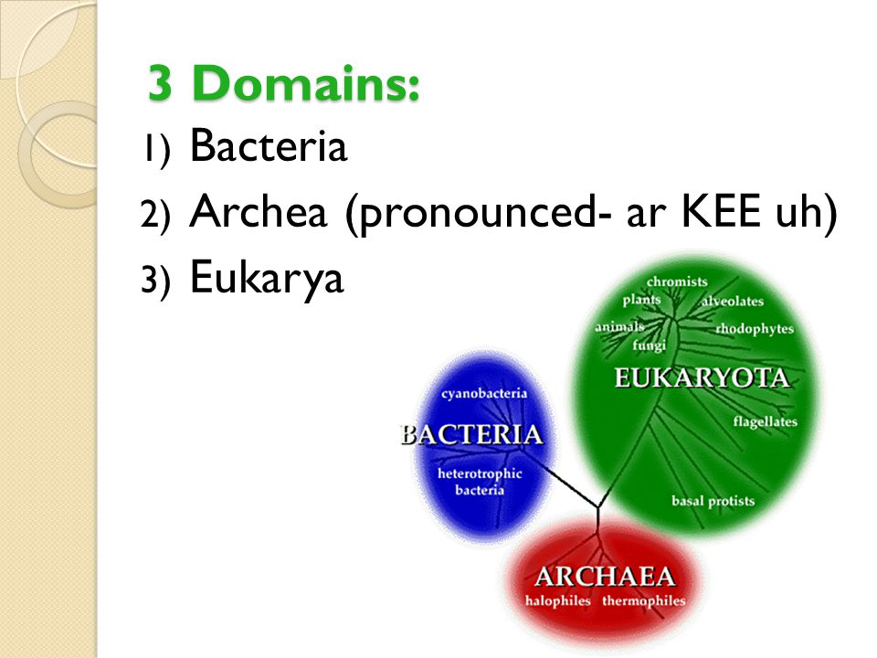 3 Domains: Bacteria Archea (pronounced- ar KEE uh) Eukarya