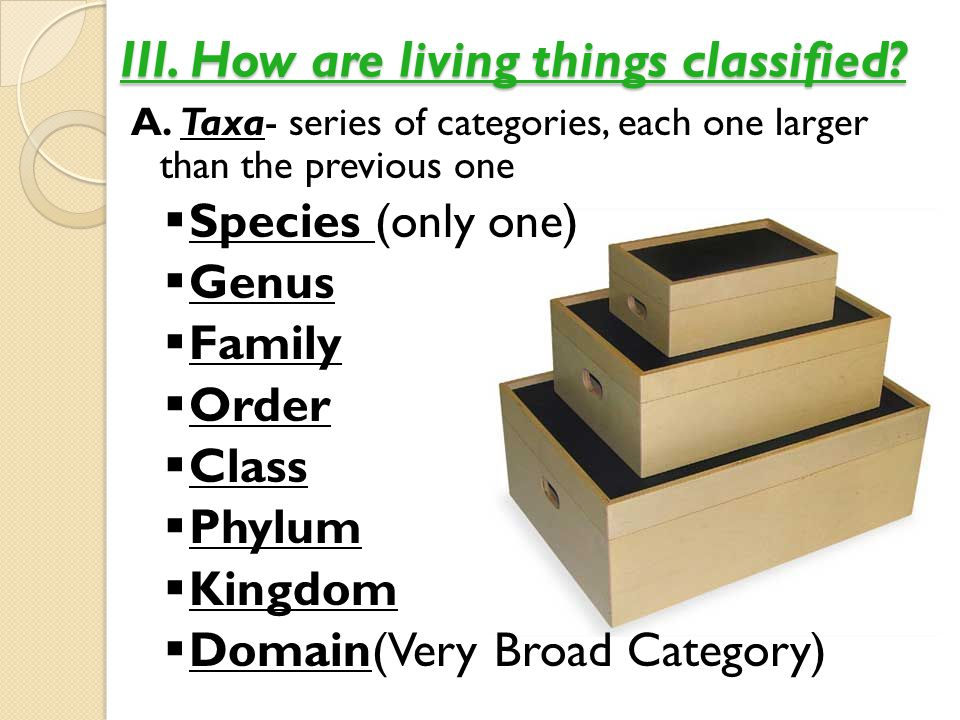 III. How are living things classified