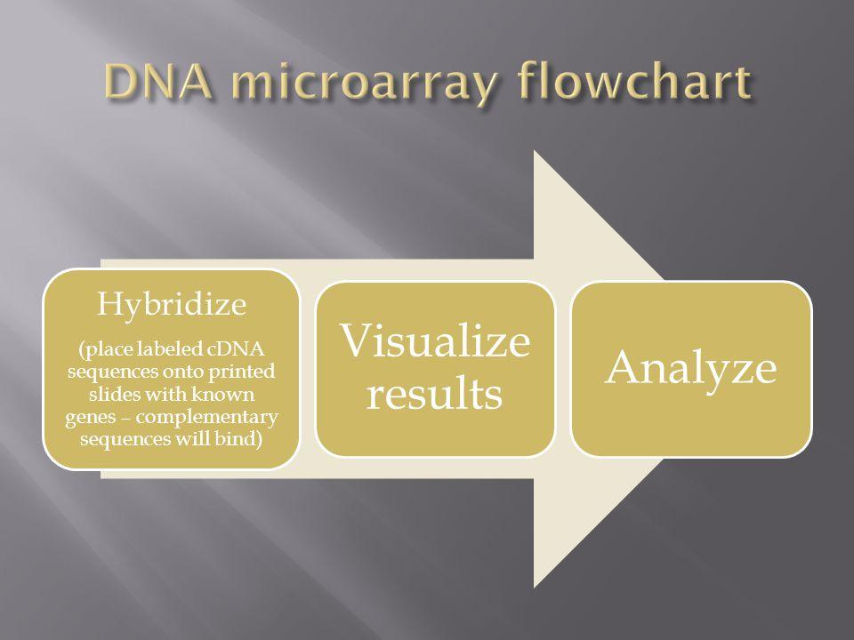 DNA microarray flowchart