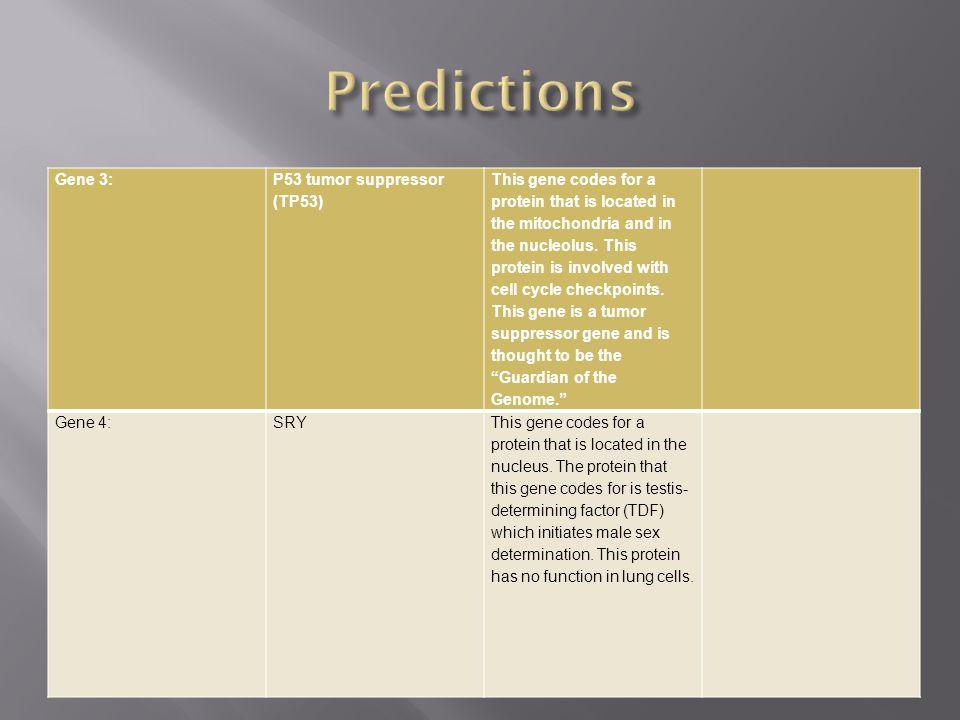 Predictions Gene 3: P53 tumor suppressor (TP53)
