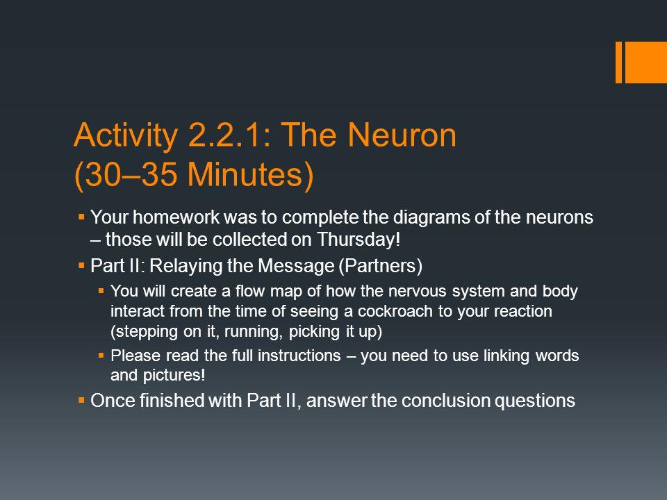 Activity 2.2.1: The Neuron (30–35 Minutes)