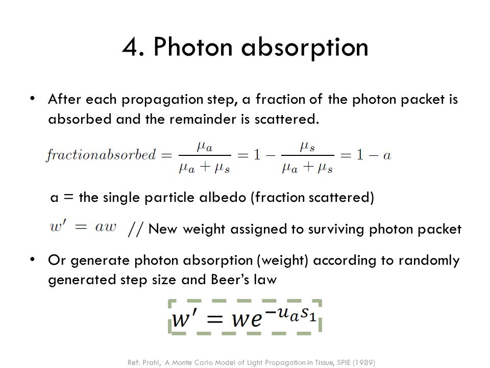4. Photon absorption After each propagation step, a fraction of the photon packet is absorbed and the remainder is scattered.