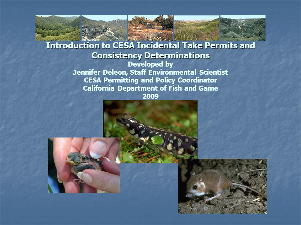 Introduction to CESA Incidental Take Permits and Consistency Determinations Developed by Jennifer Deleon, Staff Environmental Scientist CESA Permitting and Policy Coordinator California Department of Fish and Game 2009