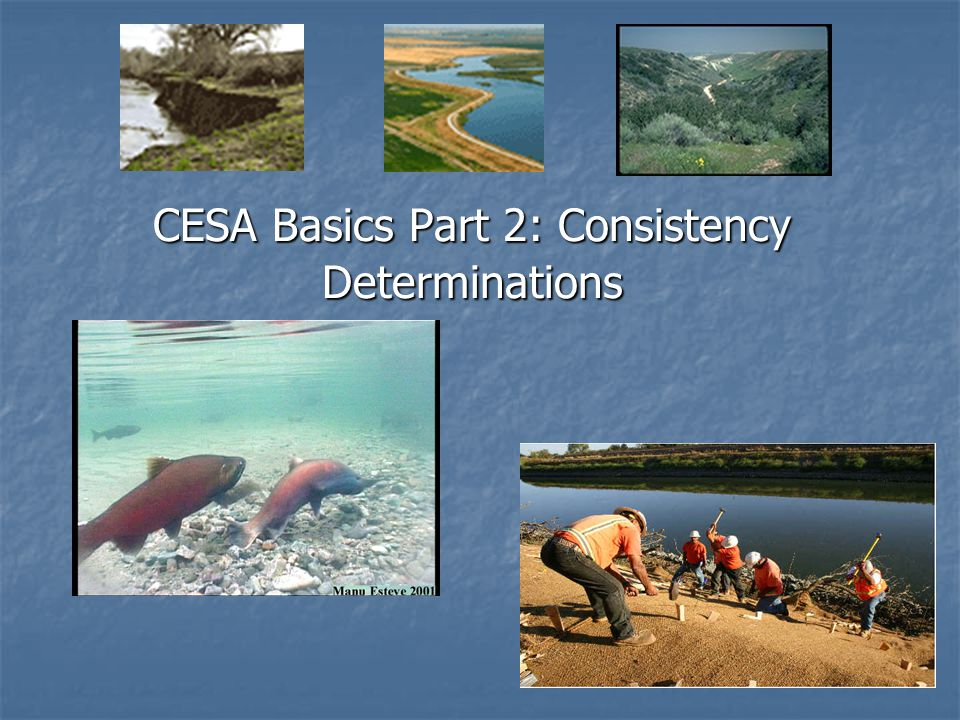 CESA Basics Part 2: Consistency Determinations
