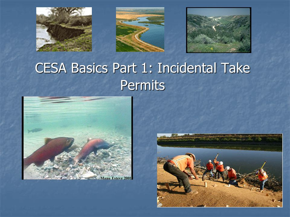 CESA Basics Part 1: Incidental Take Permits