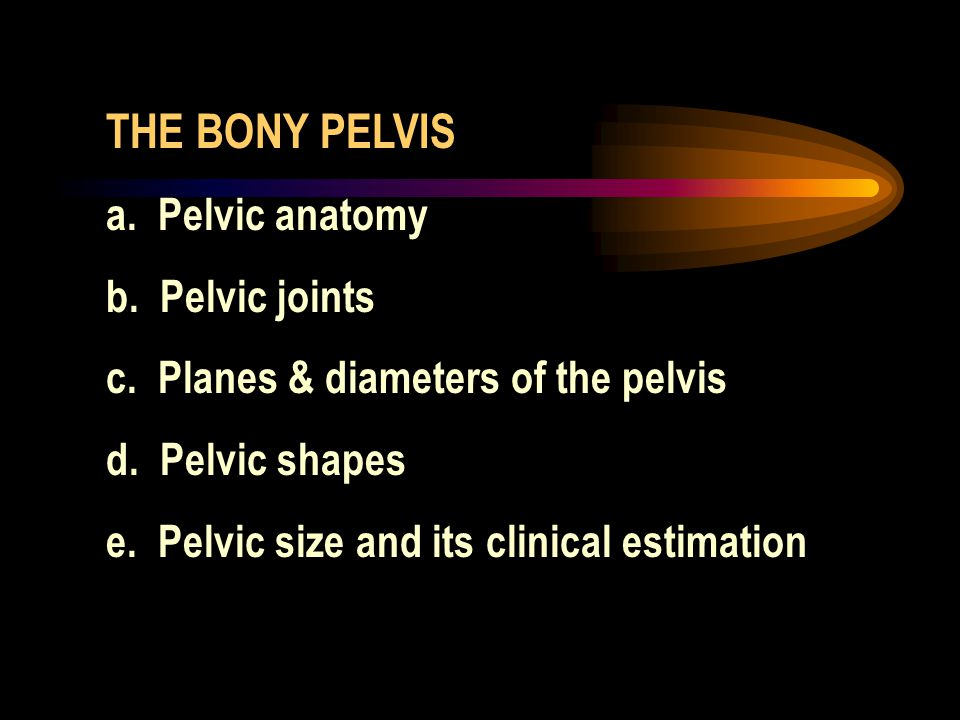 THE BONY PELVIS a. Pelvic anatomy b. Pelvic joints