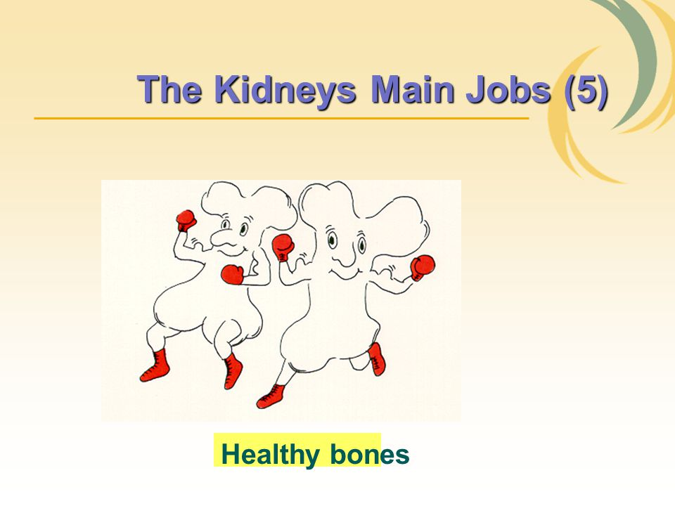 The Kidneys Main Jobs (5)