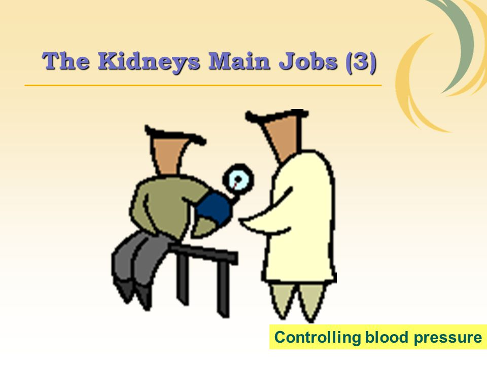 The Kidneys Main Jobs (3)