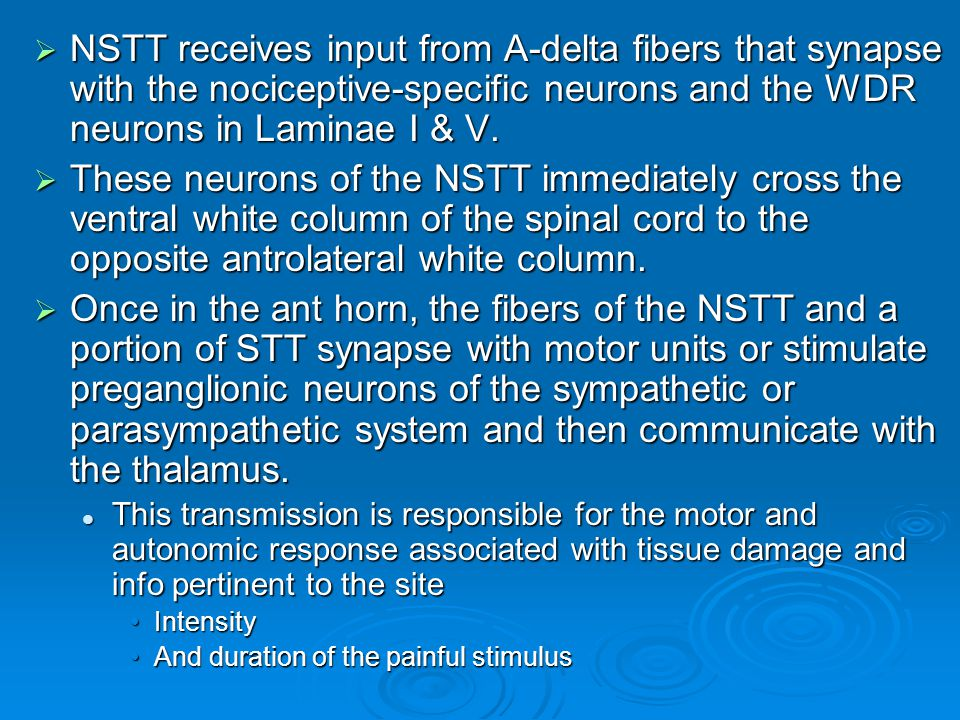 NSTT receives input from A-delta fibers that synapse with the nociceptive-specific neurons and the WDR neurons in Laminae I & V.