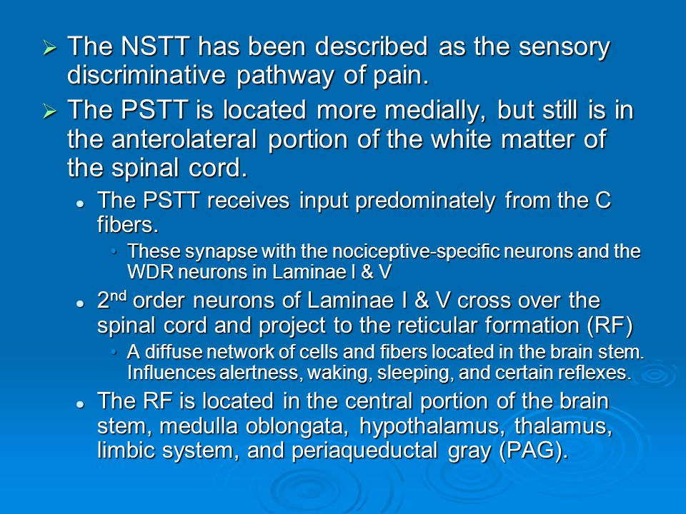 The NSTT has been described as the sensory discriminative pathway of pain.