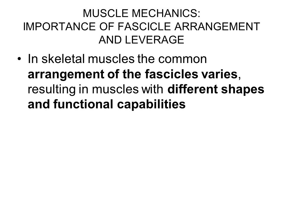 MUSCLE MECHANICS: IMPORTANCE OF FASCICLE ARRANGEMENT AND LEVERAGE