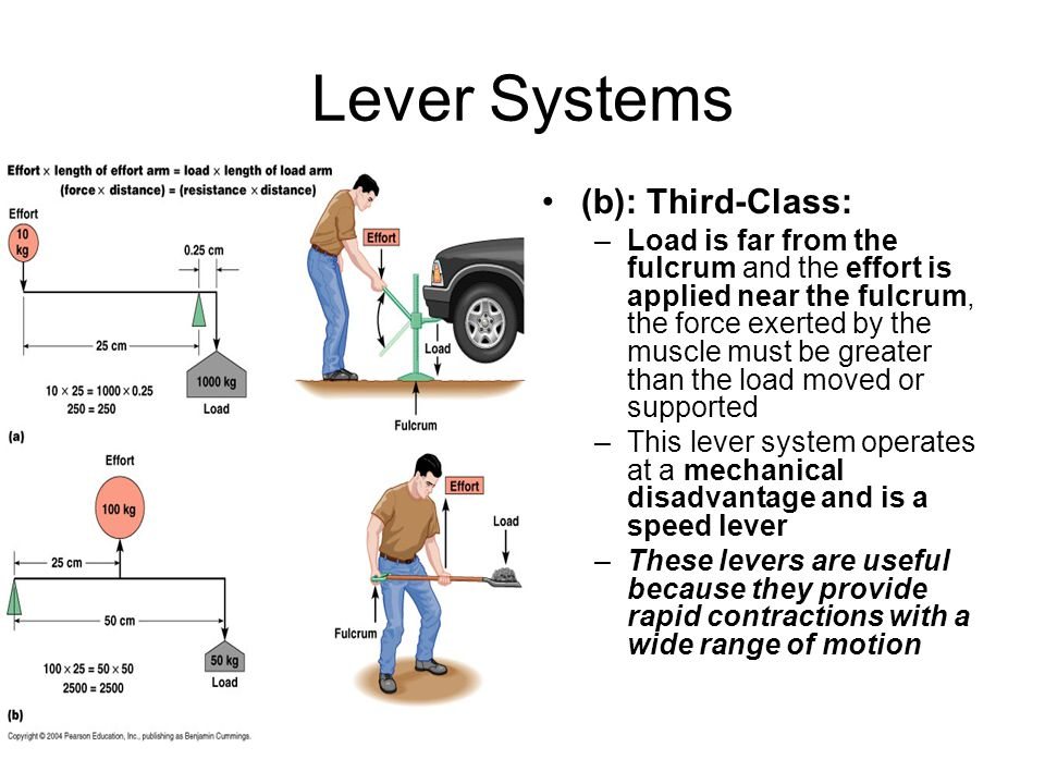 Lever Systems (b): Third-Class: