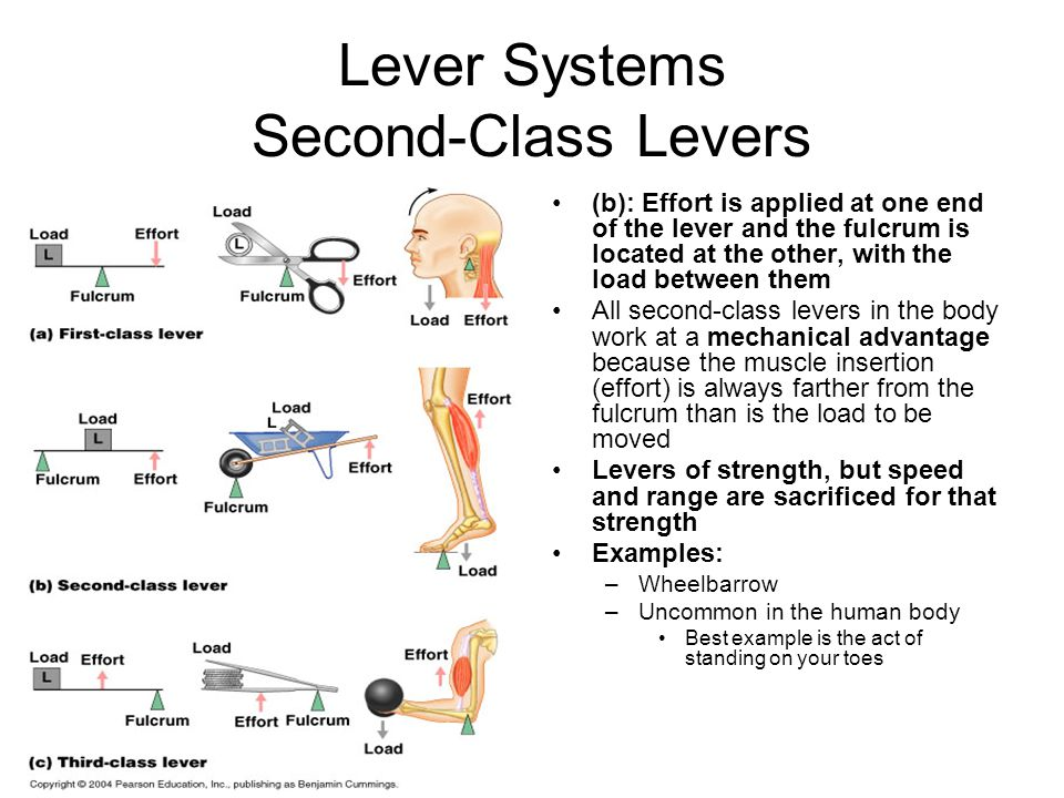Lever Systems Second-Class Levers
