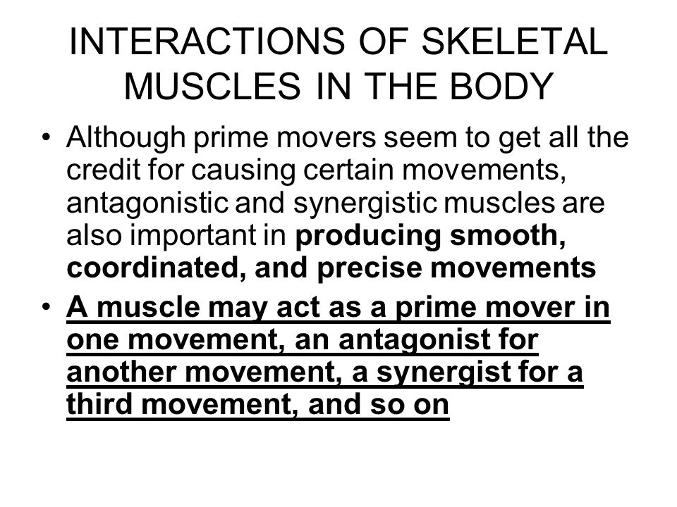 INTERACTIONS OF SKELETAL MUSCLES IN THE BODY