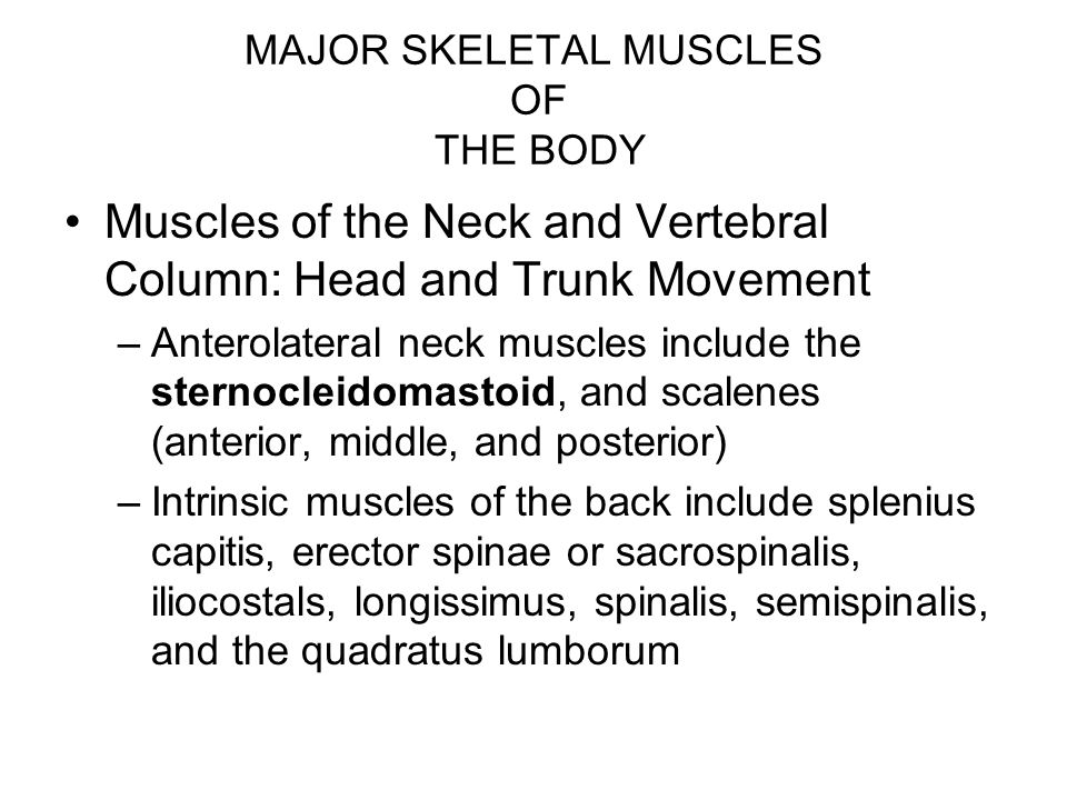 MAJOR SKELETAL MUSCLES OF THE BODY